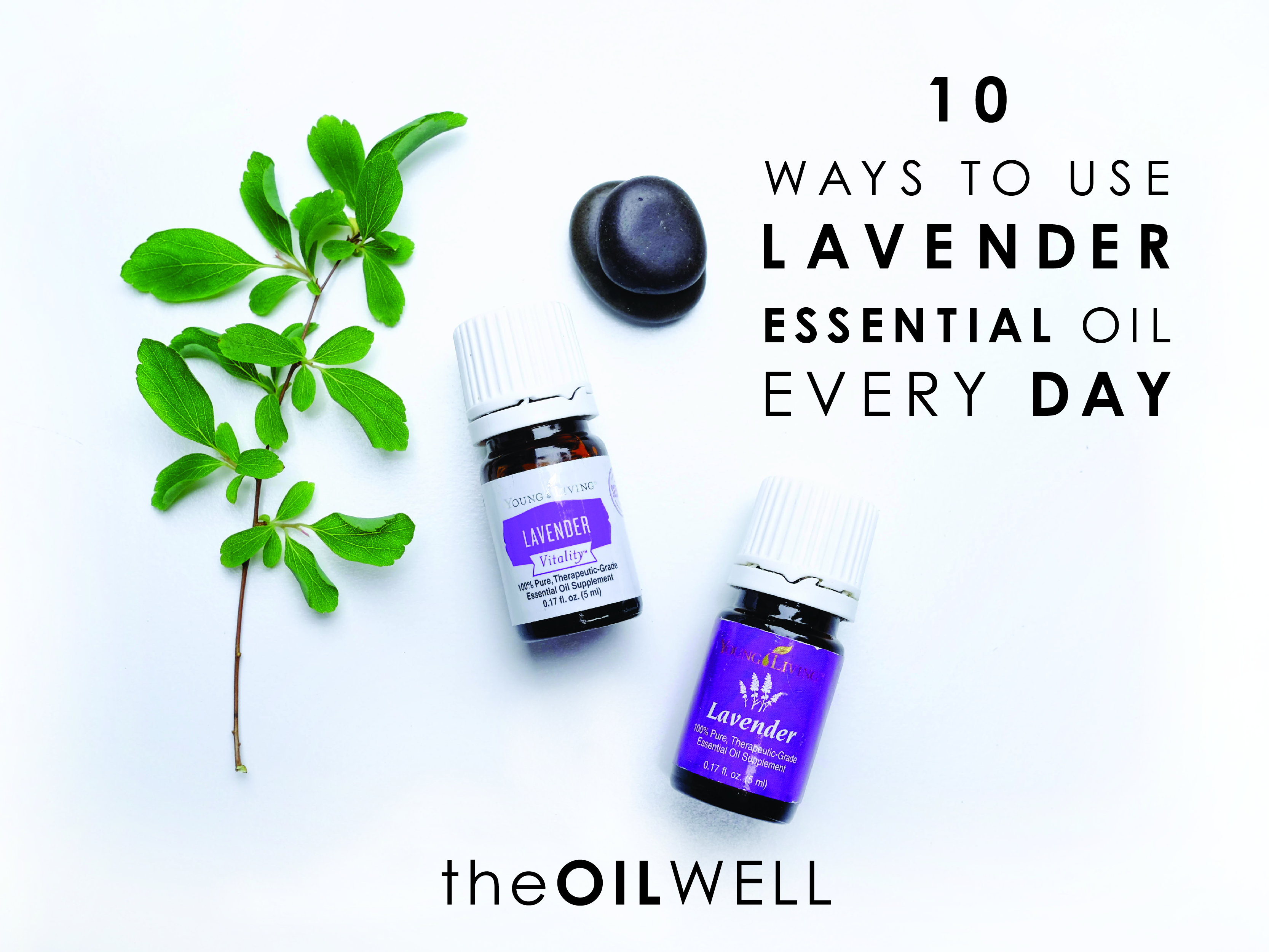 10 Ways to Use Lavender Essential Oil Everyday